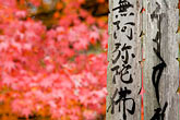 written word stock photography | Japan, Kyoto, Maple leaves and cemetery memorial, image id 5-855-2434