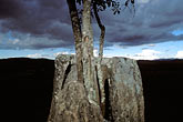 blue sky stock photography | Laos, Plain of Jars, Jars and tree and dusk, image id 8-620-1