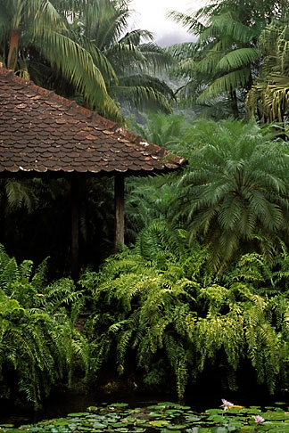 image 8-235-4 Martinique, Jardin de Balata, Gazebo, palms, ferns and water lilies