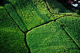 pattern stock photography | Martinique, Aerial view of sugar cane fields, image id 9-20-49