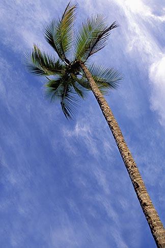 image 9-25-11 Martinique, Anse des Salines, Palms