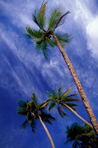image 9-25-12 Martinique, Anse des Salines, Palms
