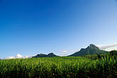 twilight stock photography | Mauritius, Sugar cane fields and mountains, image id 9-202-6