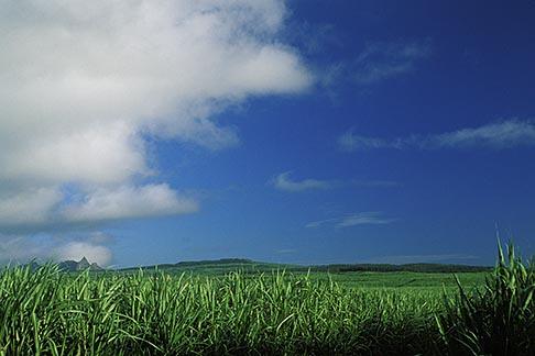 image 9-202-81 Mauritius, Sugar cane fields, Bon Acceuil