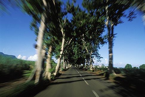 image 9-205-78 Mauritius, Tree lined road, Anse Jonchee