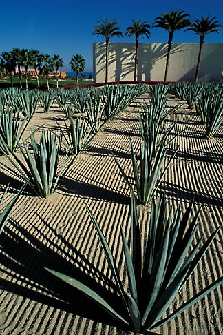 image 0-52-58 Mexico, Cabo San Lucas, Cactus and hotel entrance