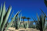 dry stock photography | Mexico, Cabo San Lucas, Cactus and hotel entrance, image id 0-52-59