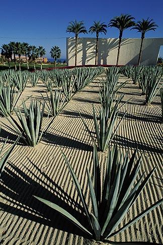 image 0-52-60 Mexico, Cabo San Lucas, Cactus and hotel entrance