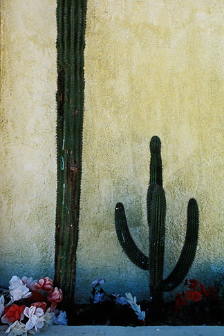 image 0-62-63 Mexico, Baja California Sur, Cactus and wall