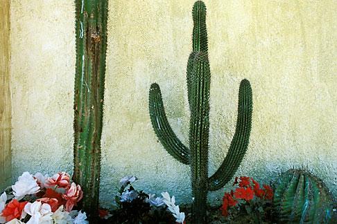 image 0-62-64 Mexico, Baja California Sur, Cactus and wall