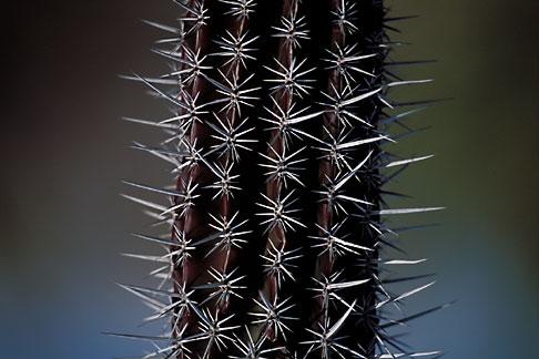 image 0-63-99 Mexico, Baja California Sur, Cactus