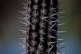thorn stock photography | Mexico, Baja California Sur, Cactus, image id 0-63-99