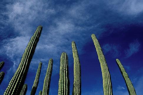 image 0-64-6 Mexico, Baja California Sur, Cactus