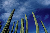 light blue stock photography | Mexico, Baja California Sur, Cactus, image id 0-64-6