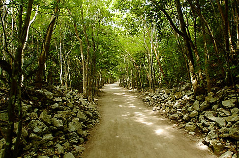 image 4-850-2837 Mexico, Yucatan, Coba, path through the forest