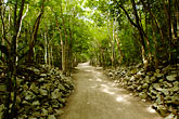 ruin stock photography | Mexico, Yucatan, Coba, path through the forest, image id 4-850-2837