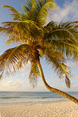 blue stock photography | Mexico, Riviera Maya, Tulum, Palms on the beach, image id 4-850-2924