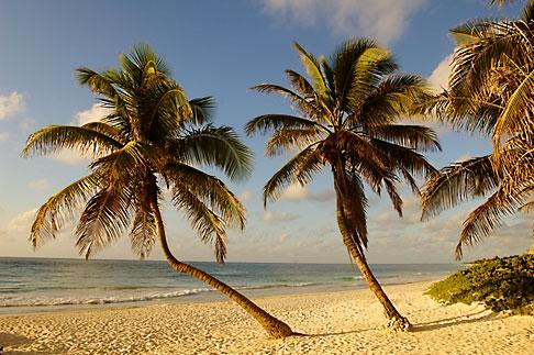 image 4-850-2929 Mexico, Riviera Maya, Tulum, Palms on the beach