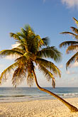 blue stock photography | Mexico, Riviera Maya, Tulum, Palms on the beach, image id 4-850-2930