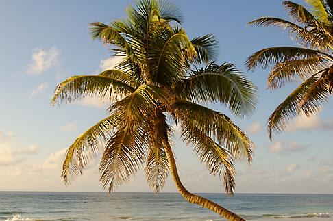 image 4-850-2931 Mexico, Riviera Maya, Tulum, Palms on the beach
