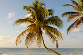 blue sky stock photography | Mexico, Riviera Maya, Tulum, Palms on the beach, image id 4-850-2931