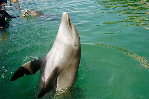 image 4-850-4090 Mexico, Riviera Maya, Puerto Aventuras, Dolphin Discovery