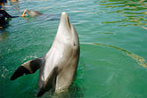 watch stock photography | Mexico, Riviera Maya, Puerto Aventuras, Dolphin Discovery, image id 4-850-4090