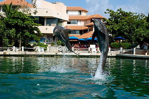 image 4-850-4174 Mexico, Riviera Maya, Puerto Aventuras, Dolphin Discovery