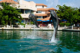 lively stock photography | Mexico, Riviera Maya, Puerto Aventuras, Dolphin Discovery, image id 4-850-4174