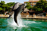 lively stock photography | Mexico, Riviera Maya, Puerto Aventuras, Dolphin Discovery, image id 4-850-4181