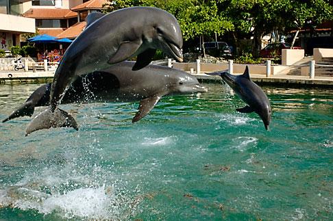 image 4-850-4208 Mexico, Riviera Maya, Puerto Aventuras, Dolphin Discovery