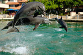 lively stock photography | Mexico, Riviera Maya, Puerto Aventuras, Dolphin Discovery, image id 4-850-4208
