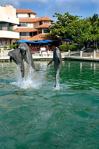image 4-850-4209 Mexico, Riviera Maya, Puerto Aventuras, Dolphin Discovery