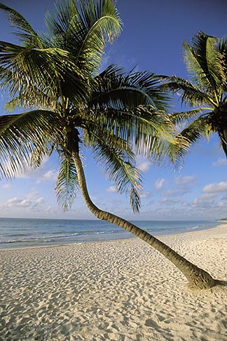 image 4-873-9 Mexico, Riviera Maya, Tulum, Early morning on the beach