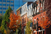 tree stock photography | Canada, Montreal, Row houses, image id 6-460-2292