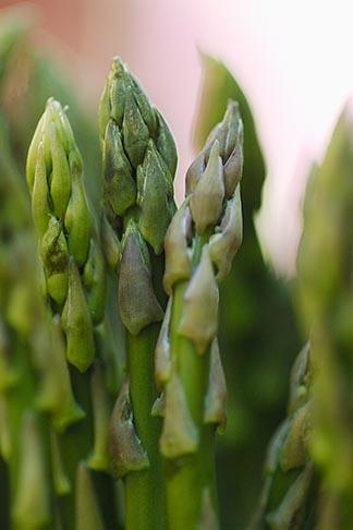 image 6-460-7742 Food, Asparagus, closeup