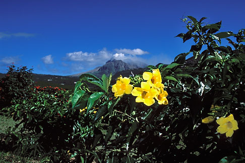 image 0-150-93 Montserrat, Volcano, Volcano with flowers in foreground