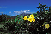 with flowers in foreground stock photography | Montserrat, Volcano, Volcano with flowers in foreground, image id 0-150-93