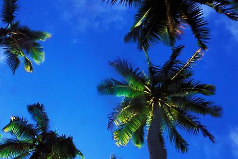 image 9-504-12 Niue, Palm trees
