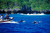 boat stock photography | Niue, Watching Spinner Dolphins, image id 9-505-40