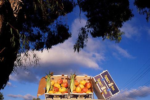 image 9-441-44 California, Oakland, Fruit vendors truck