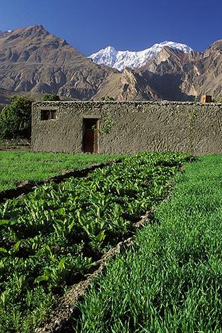 image 4-451-1 Pakistan, Karakoram Highway, Fields and mountains, Altit, Hunza