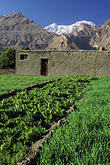 agrarian stock photography | Pakistan, Karakoram Highway, Fields and mountains, Altit, Hunza, image id 4-451-1