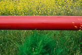mustard flowers and red pipeline stock photography | Still life, Mustard flowers and red pipeline, image id 4-217-35