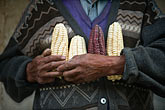 travel stock photography | Peru, Ollantaytambo, Man holding varieties of Andean corn, image id 8-761-1257