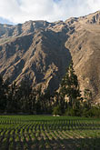 peruvian stock photography | Peru, Ollantaytambo, Fields in Urubamba Valley, image id 8-761-1283