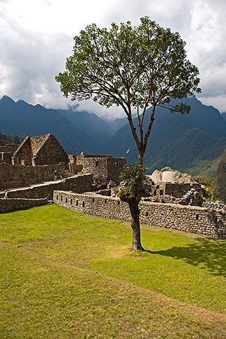 image 8-761-1713 Peru, Machu Picchu, Sacred Plaza and solitary tree with ruins of stone houses
