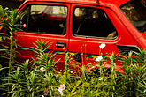 flowers stock photography | Poland, Jelenia Gora, Red car abandoned in garden, image id 4-960-1236