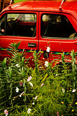 flowers stock photography | Poland, Jelenia Gora, Red car abandoned in garden, image id 4-960-1237