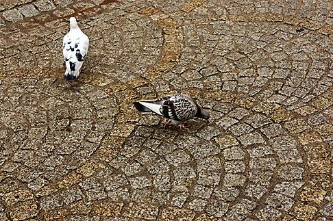 image 4-960-1355 Poland, Jelenia Gora, Birds and cobbles